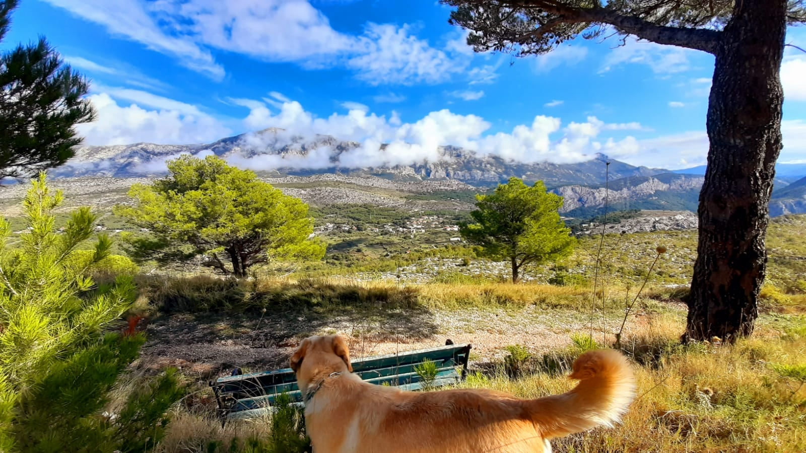 Trenutno pregledavate Dalmacija Ultra Trail 2020